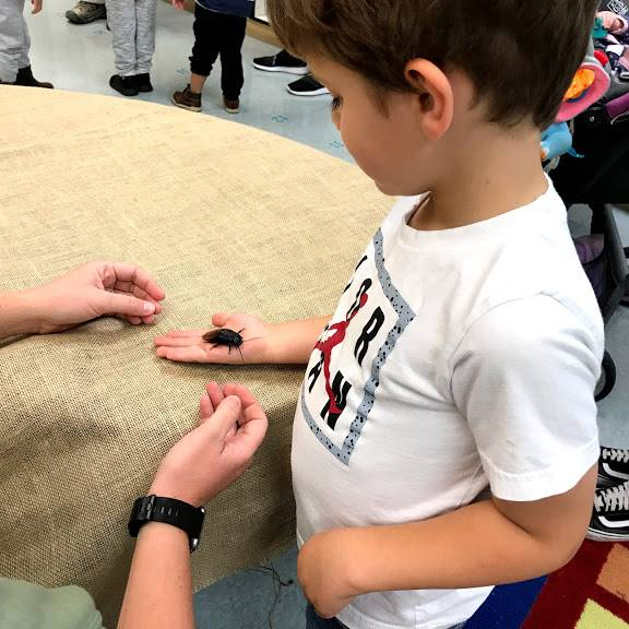 Child holding a cockroach